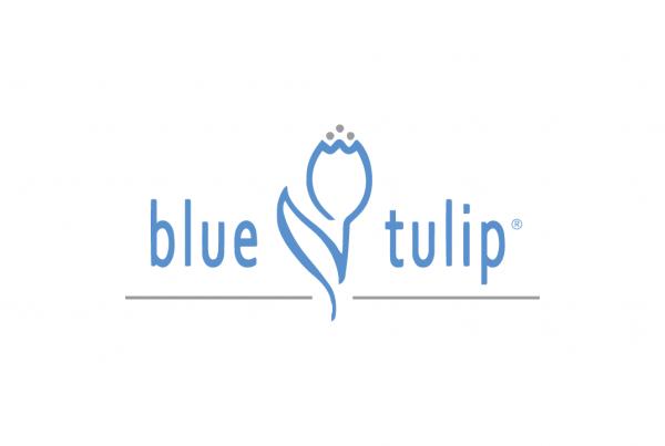 blue-tulip-2